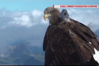 Cercetătorii au montat o cameră de filmat pe un vultur. Imaginile surprinse