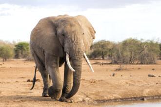 Momentul tulburător în care turiștii aproape că sunt călcați în picioare de un elefant VIDEO