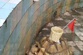 Vizitatori revoltați de o grădină zoologică din China. Ce au văzut pe spatele unei țestoase