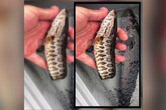 Pești care pot supraviețui pe uscat descoperiți în Asia. Populația, avertizată să îi ucidă