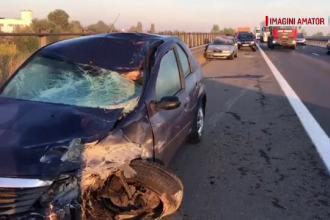 Accident grav de circulație pe A1, după ce un cal a intrat pe autostradă