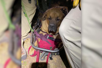 Câine de 85 de kilograme, salvat de pe munte, după ce a leşinat de oboseală