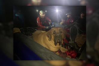 Un câine gigant a fost salvat de pe munte, după ce a leșinat din cauza oboselii