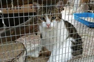 Doi traficanţi de droguri ar putea scăpa de acuzaţii datorită unei pisici