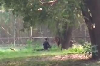 Momentul în care un tânăr întră în țarcul leului la Zoo și privește animalul în ochi. VIDEO