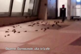 Scene de groază pe terasa unei clădiri. Sute de păsări găsite moarte