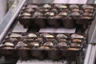 Industria belgiană de ciocolată, amenințată de Brexit. Ce măsuri au luat producătorii