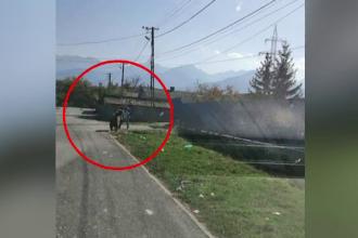 Traseul ursului care a atacat oamenii din Victoria, filmat de camere. Ce spun specialiștii