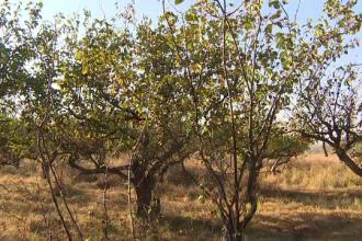 Fructele care riscă să dispară complet din România. Pomii, loviţi de o boală misterioasă
