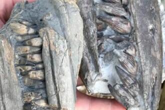 Un britanic a descoperit, la doar câteva luni distanţă, resturile a doi dinozauri uriaşi