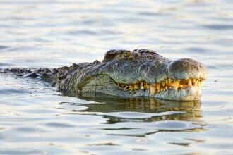 """O fetiță și-a salvat prietena din gura unui crocodil: """"Eram responsabilă să o salvez"""""""