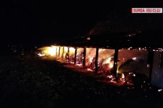11 animale au pierit într-un incendiu, în Cluj. Focul ar fi fost pus intenționat