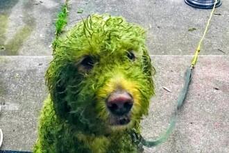 Ce a pățit un câine după ce s-a jucat în iarbă. Imaginea a devenit virală