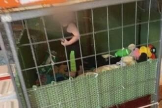 """Copilul închis într-o cușcă alături de șerpi uriași și șobolani era într-un mediu """"sigur"""", susțin părinții în fața instanței"""