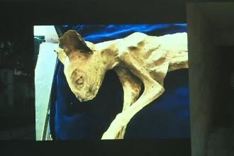O pisică mumificată, găsită în peretele unei case din Bistrița, este licitată la Londra