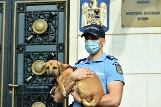 Marcel Vela: Guvernul a aprobat înfiinţarea Poliţiei Animalelor