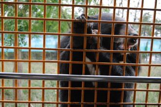 Un angajat al unui parc zoologic din Shanghai a fost atacat şi ucis de urşi în faţa vizitatorilor