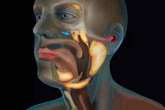 Cercetătorii olandezi au descoperit un nou organ în corpul uman. Ce rol are