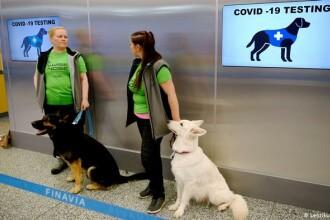 Cercetători: Câinii pot detecta coronavirusul rapid și ieftin. Precizia este de aproape 100%