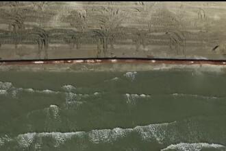 Câmpie cu iarbă de mare întinsă pe 785.000 m va fi plantată sub apă în sudul litoralului românesc