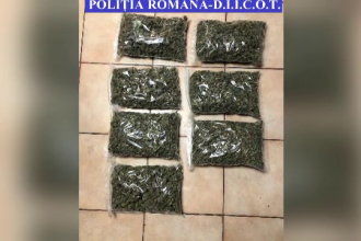 Sute de kilograme de canabis au fost găsite în Cluj. Au avut loc percheziții la 7 adrese