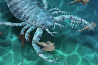 Un înspăimântător scorpion de mare, lung de un metru, a fost descoperit în China. Cum își captura prada