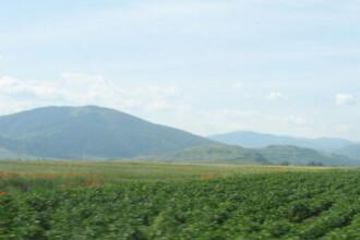 Fermierii fluiera a paguba in loc sa culeaga roadele