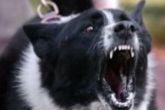 Cluj: locuitorii cartierului Iris, terorizati de caini