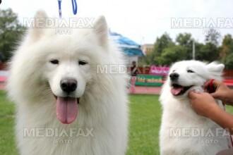 Expozitie canina, in week-end, la Arad!