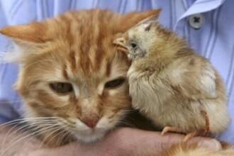 Animalele de companie sufera cand stapanii divorteaza