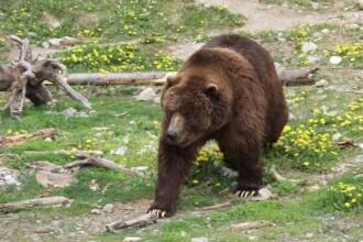 Avem atat de multi ursi, incat ii trimitem la export!