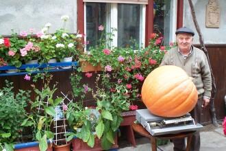 Ce e mare, portocaliu si are aproape 50 de kg?