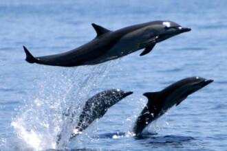 Trei pui de delfin adusi din China vor deveni vedete la Constanta