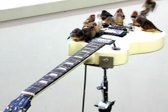 Ce au in comun o gaina, o vrabiuta pe o chitara electrica si o masina?