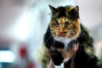 Cei mai rasfatati catei si cele mai adorate pisici! Exemple de lux