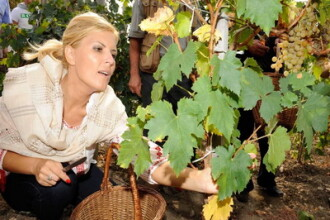 Ministrul Elena Udrea a fost la cules de struguri, imbracata in ie! FOTO