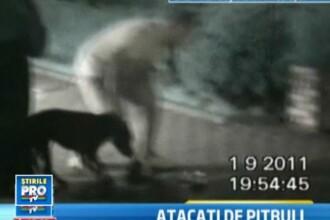 IMAGINI SOCANTE. Pitbull fara botnita a muscat trei persoane in centrul orasului Ploiesti