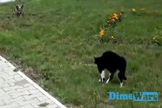 VIDEO. Clipul la care a ras tot internetul. Infruntare in stil western, intre un caine si o pisica