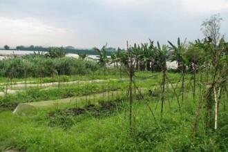 Agricultura ecologica, intre hrana viitorului si o bula speculativa