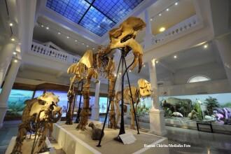 Galerie FOTO. Noul muzeu Antipa, imbinare intre vremuri apuse si tehnologie. Cat costa biletul
