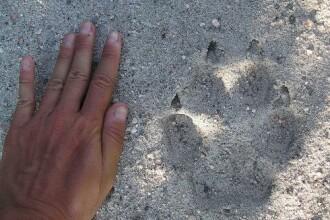 Misterul lui Mowgli din Germania. Un tanar a trait intr-o padure in ultimii 5 ani