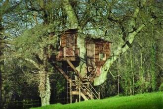 Ce a descoperit o vedeta de la Hollywood cand a verificat casa din copac.