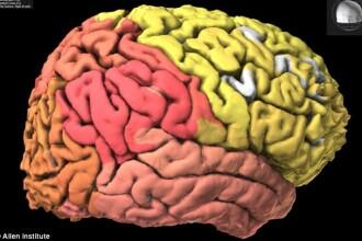 Alimentele bogate in antioxidanti sau acizi grasi pot fi extrem de benefice. Sase fructe sau legume care stimuleaza creierul