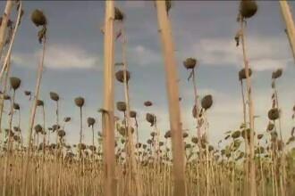 Romania, blestemul pamantului. Agricultura ar putea fi salvarea acestei tari!