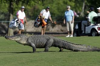Un barbat din SUA si-a pierdut doua degete, dupa ce a fost atacat de un crocodil pe un teren de golf