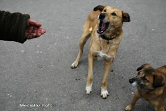 Antonescu: Suntem siliti sa recurgem la eutanasierea cainilor. Copilul a murit din cauza oamenilor