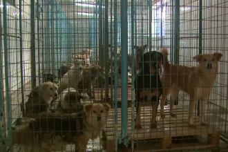 Grecii vor maidanezii din Romania. Zeci de caini au fost adoptati de o fundatie din Grecia