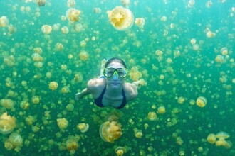 A inotat printre mii de meduze, imbracata doar in costum de baie. FOTO