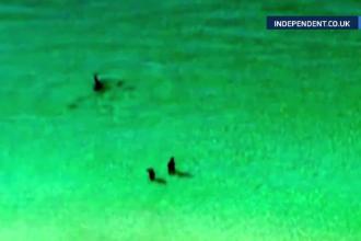 Cuplu urmarit de un rechin-ciocan aproape de mal, in Florida. Cum s-a terminat
