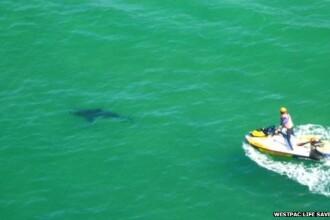 Un barbat din Australia a fost atacat de un rechin de doi metri in timp ce inota in apropiere de plaja